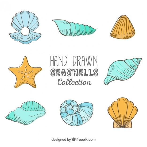 Hand getrokken schelpen collectie Gratis Vector