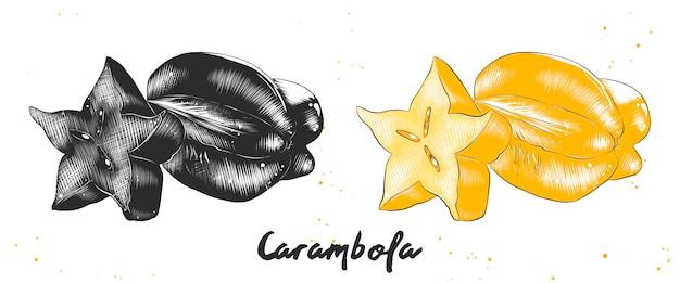 Hand getrokken schets van carambola-fruit Premium Vector