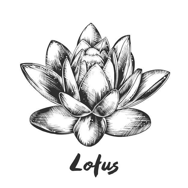 Hand getrokken schets van lotusbloem in zwart-wit Premium Vector