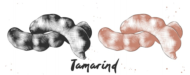 Hand getrokken schets van tamarinde Premium Vector