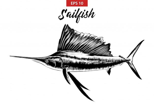 Hand getrokken schets van zeilvis in het zwart Premium Vector