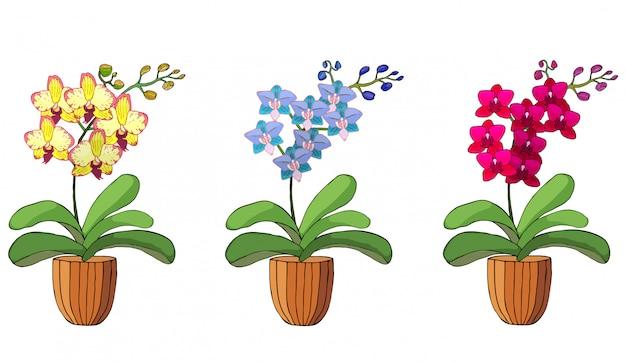 Hand getrokken set orchideeën in bloempotten. Premium Vector