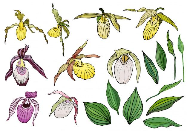 Hand getrokken set van orchideebloemen. Premium Vector