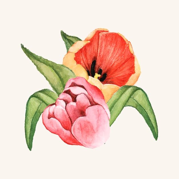 Hand getrokken tulp bloem geïsoleerd Gratis Vector