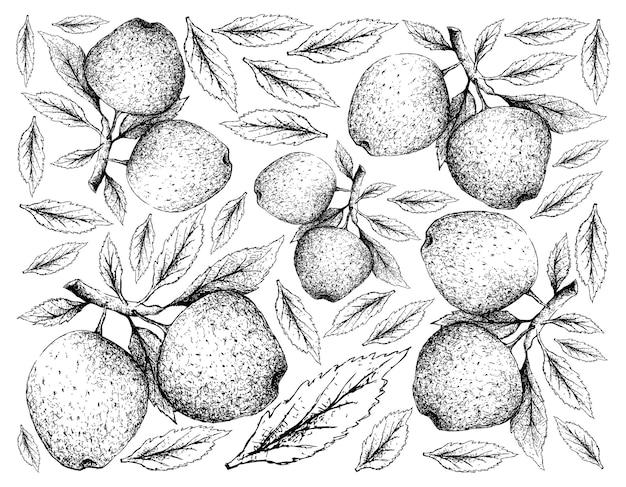 Hand getrokken van appelvruchten op witte achtergrond Premium Vector