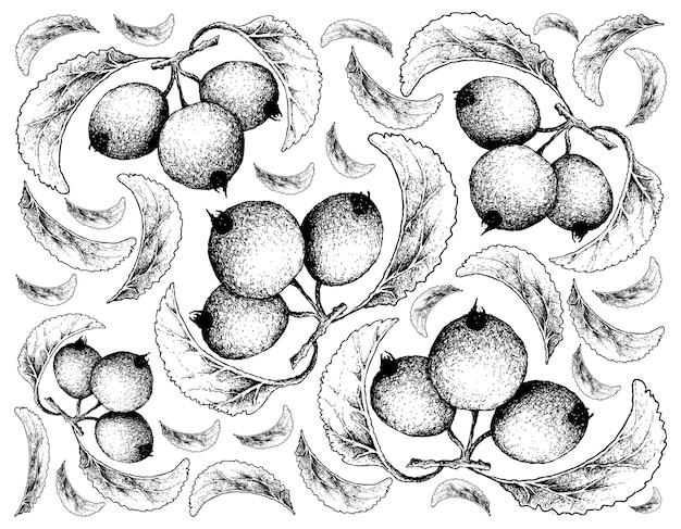 Hand getrokken van crabapple fruit op witte achtergrond Premium Vector