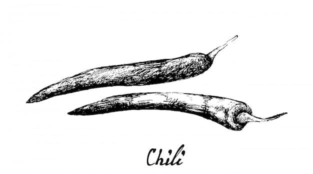 Hand getrokken van verse chili pepers op wit Premium Vector