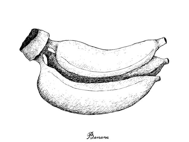Hand getrokken van verse rijpe gouden bananen Premium Vector