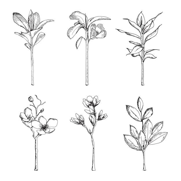 Handgetekend met kruiden en wilde bloemen Gratis Vector