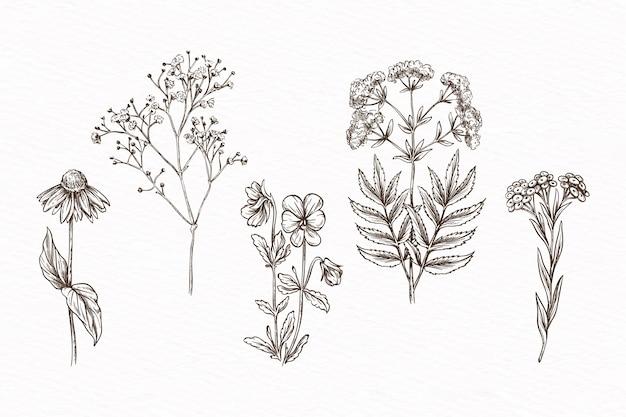 Handgetekend met kruiden & wilde bloemen Gratis Vector