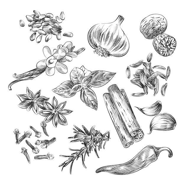 Handgetekende schets van kruiden, specerijen en zaden. de set bestaat uit zonnebloempitten, knoflook, kaneel, badian, peper, anjer, basilicum Premium Vector