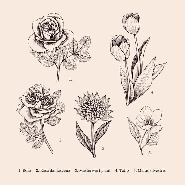 Handgetekende vintage plantkunde bloemencollectie Gratis Vector