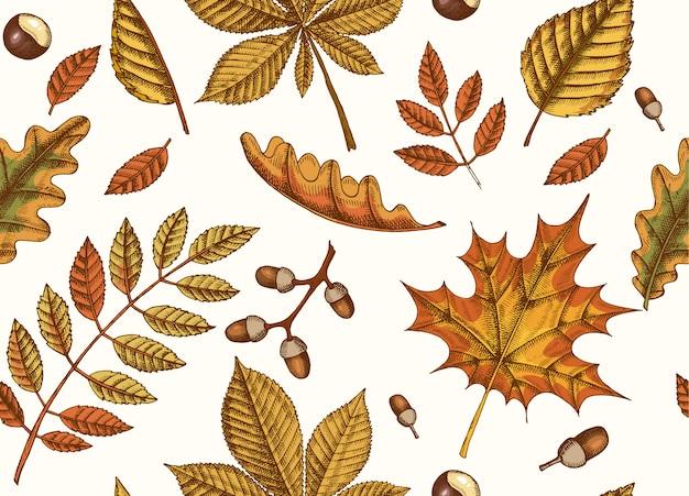 Herfst naadloze patroon met hand getrokken bladeren van esdoorn, berk, kastanje, eikel, essenboom, eik op zwart. schetsen. voor behang Premium Vector