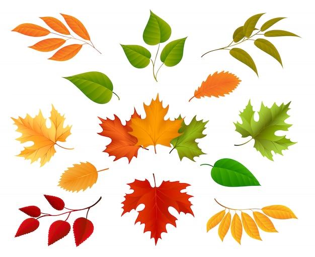 Herfstbladeren pictogrammen Premium Vector
