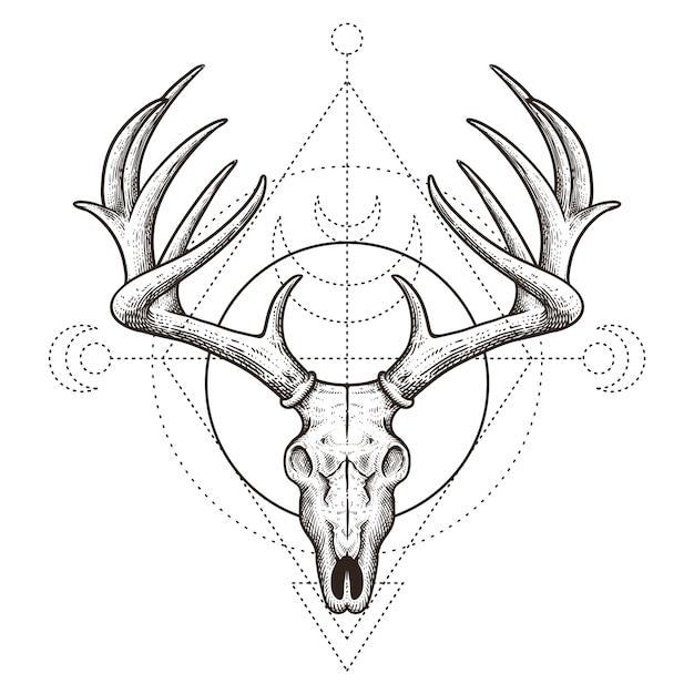 Herten schedel vintage hand getrokken illustratie Premium Vector