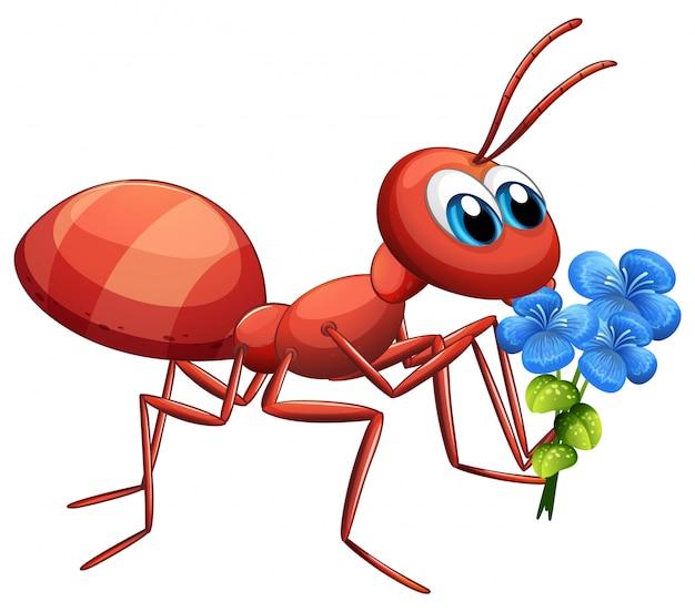 Het leuke karakter die van het mierenbeeldverhaal blauwe bloem op witte achtergrond houden Gratis Vector