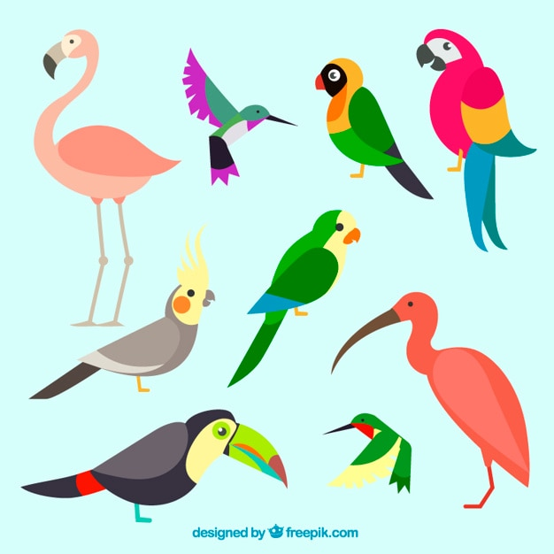 Het verzamelen van exotische en kleurrijke vogel Gratis Vector
