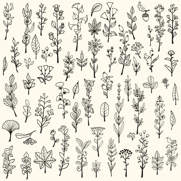 Het verzamelen van handgetekende vector doodle kruiden en bloemen Gratis Vector