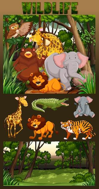Het wild leven in het bos illustratie Gratis Vector