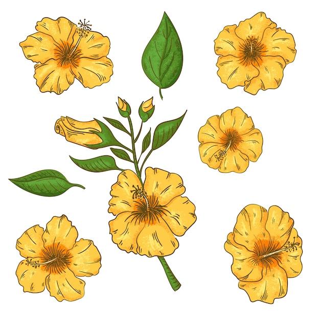 Hibiscusbloemen met bladeren worden geplaatst die. geïsoleerd Premium Vector