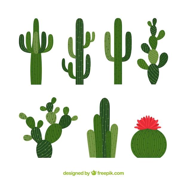 Hoge cactus collectie Gratis Vector