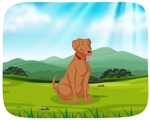 Hond in parkscène Gratis Vector