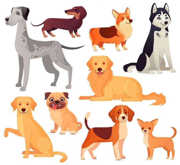 Honden huisdieren karakter. labrador, golden retriever en husky. cartoon geïsoleerde set Premium Vector