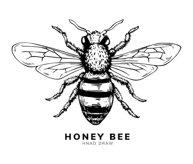 Honingbij hand tekenen ontwerp Premium Vector