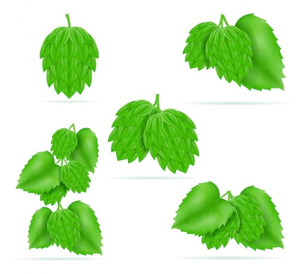 Hop rijp en groen bier voorbereiding ingrediënt Premium Vector