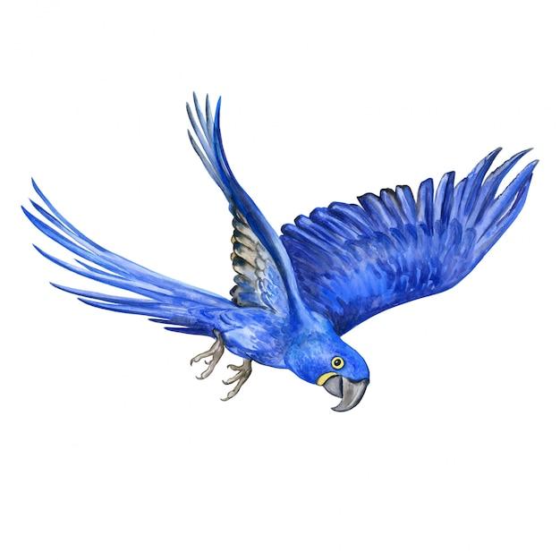 Hyacint ara. vliegende papegaai Premium Vector