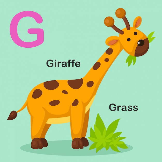 Illustratie geïsoleerd dier alfabet brief g-gras, giraffe Premium Vector