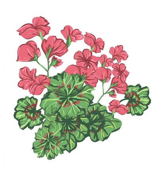 Illustratie geranium bloem. floral design print Premium Vector