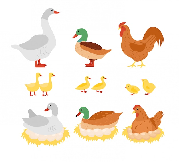 Illustratie set gevogelte, kip, kip, haan en eend, gans op het nest met eieren in platte cartoon design. Premium Vector