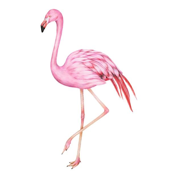 Illustratie van de roze stijl van de flamingo-waterverf Gratis Vector
