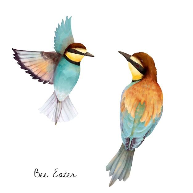 Illustratie van de vogel van de bijeneter die op witte achtergrond wordt geïsoleerd Gratis Vector