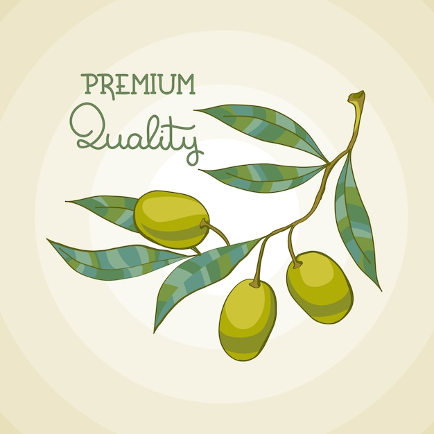 Illustratie van olijftak. olijfboom. olie van topkwaliteit Gratis Vector