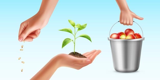 Illustratie van planten teeltproces Gratis Vector