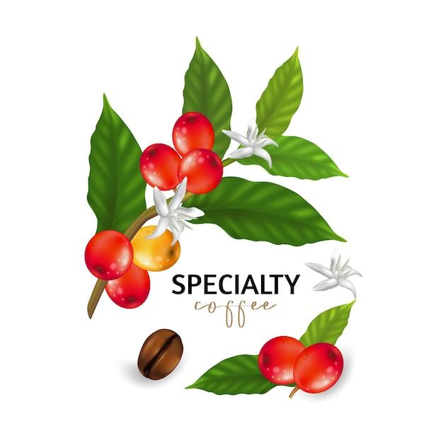 Illustratie van speciale koffie, takken van koffieboom met bladeren en bessen Premium Vector