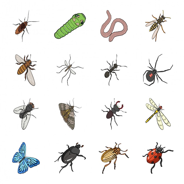 Insect cartoon ingesteld pictogram. kever geïsoleerd cartoon ingesteld pictogram. insect. Premium Vector