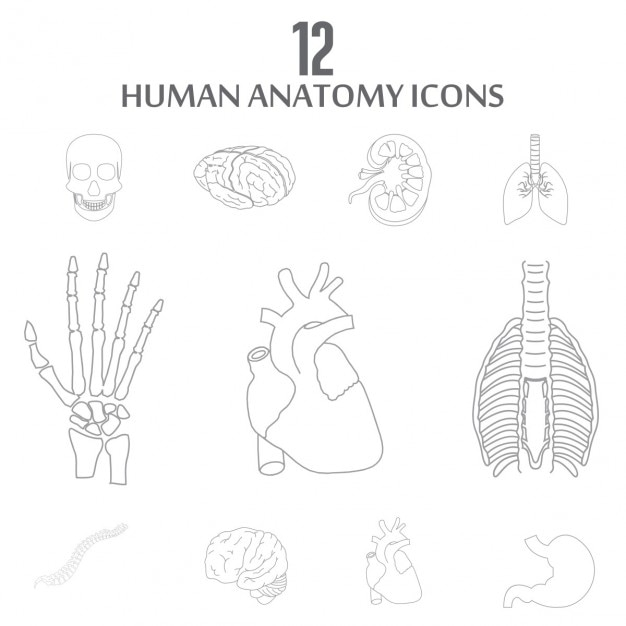 Interne menselijke organen outline icon set Gratis Vector