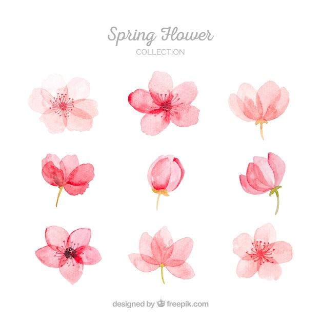Inzameling van roze de lentebloemen Gratis Vector