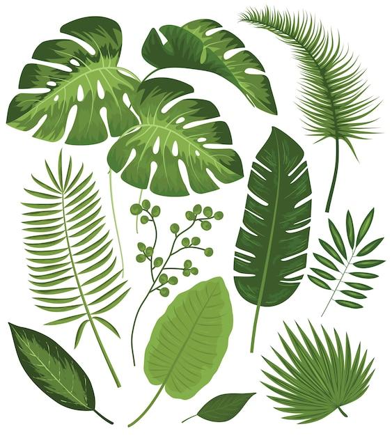 Inzameling van tropische bladeren Gratis Vector
