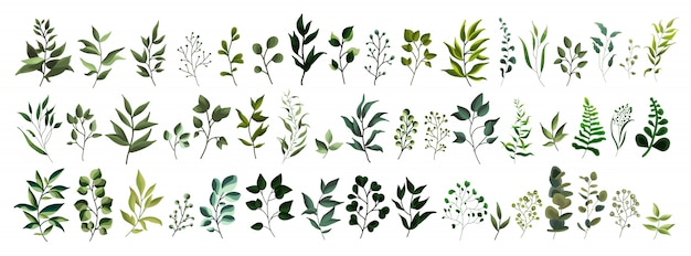 Inzameling van van de de installatie boskruiden van het groenblad de lenteflora tropische bladeren in waterverfstijl. Gratis Vector