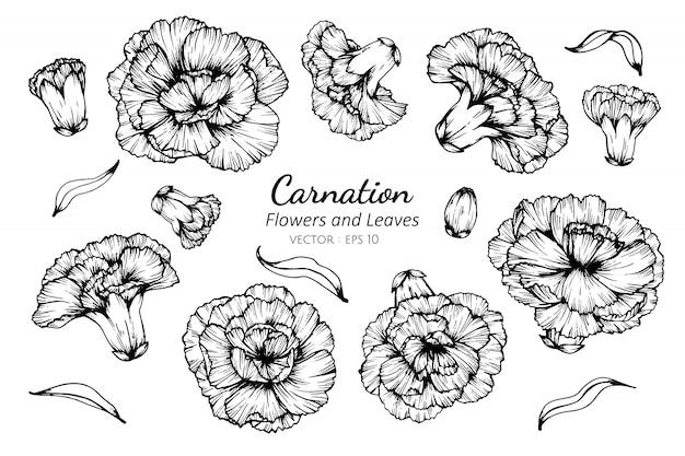 Inzamelingsreeks van anjerbloem en bladeren die illustratie trekken. Premium Vector