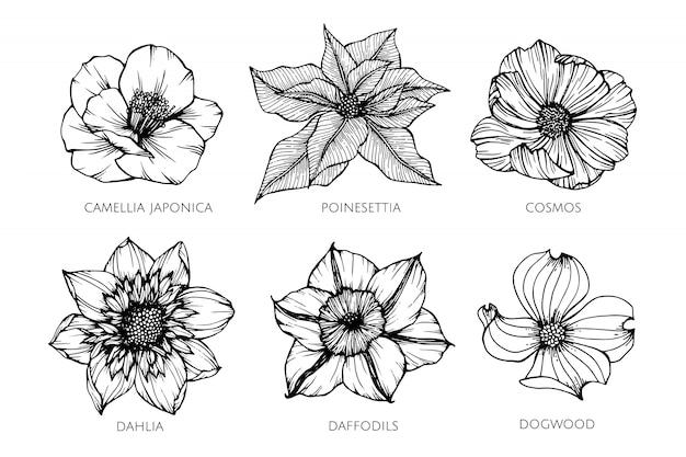 Inzamelingsreeks van de illustratie van de bloemtekening. Premium Vector