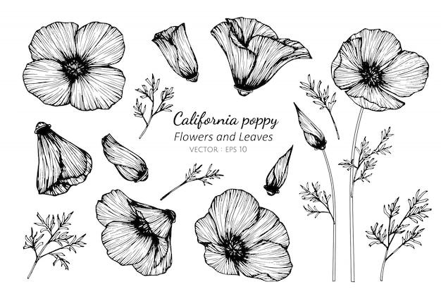 Inzamelingsreeks van de papaverbloem van californië en bladeren die illustratie trekken. Premium Vector