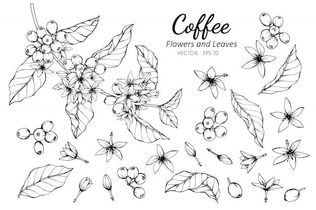 Inzamelingsreeks van koffiebloem en bladeren die illustratie trekken. Premium Vector