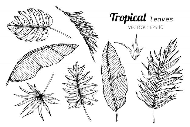 Inzamelingsreeks van tropische bladeren die illustratie trekken. Premium Vector