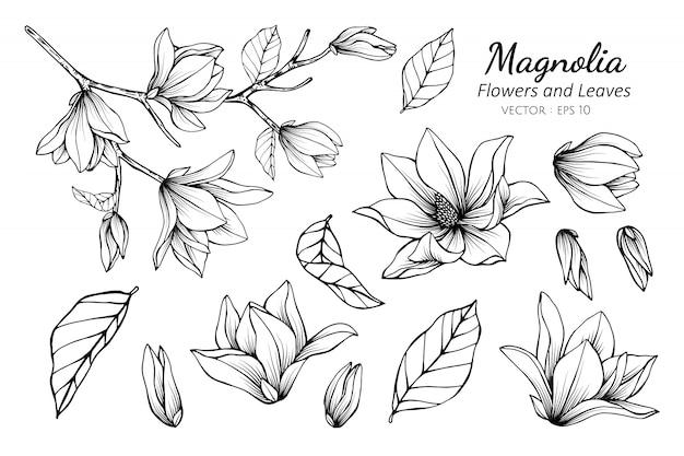 Inzamelingsset van magnoliabloem Premium Vector