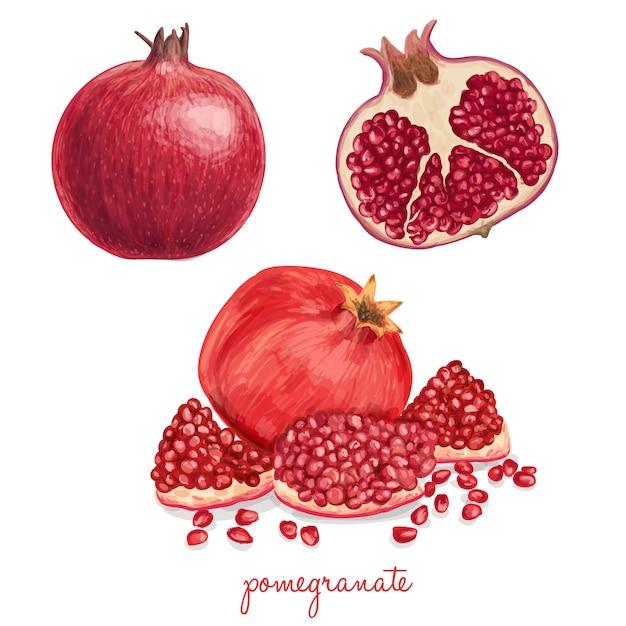 Juicy heerlijke getrokken hand granaatappel Gratis Vector
